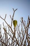 Τελευταίο φύλλο στο δέντρο Στοκ φωτογραφίες με δικαίωμα ελεύθερης χρήσης