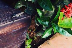 Τζαμάικα Στοκ φωτογραφία με δικαίωμα ελεύθερης χρήσης