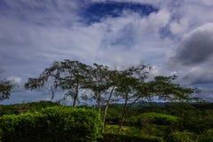 Τζαμαϊκανά σύννεφα στοκ εικόνες