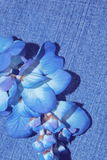 τζιν παντελόνι Στοκ φωτογραφίες με δικαίωμα ελεύθερης χρήσης