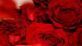Τηγάνι κινηματογραφήσεων σε πρώτο πλάνο τριαντάφυλλων ημέρας βαλεντίνων ` s απόθεμα βίντεο