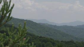 Τηγάνι πέρα από ένα πράσινο πεύκο βουνών πιό forrest απόθεμα βίντεο