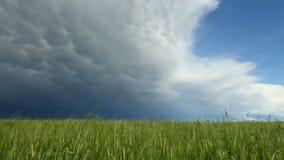 Τηγάνι της συγκομιδής σιταριού με το πλησιάζοντας σύννεφο θύελλας απόθεμα βίντεο