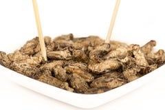 Τηγανισμένα έντομα γρύλων Στοκ Εικόνα