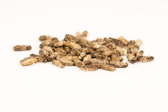 Τηγανισμένα έντομα γρύλων Στοκ εικόνα με δικαίωμα ελεύθερης χρήσης