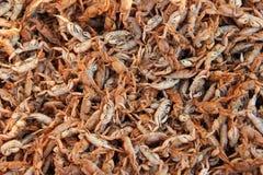 Τηγανισμένα τρόφιμα καβουριών Στοκ Φωτογραφία