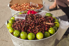 Τηγανισμένα Grasshoppers για την πώληση, Μεξικό Στοκ εικόνες με δικαίωμα ελεύθερης χρήσης