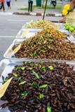 Τηγανισμένο κατάστημα εντόμων, δίκαιο σε αστικό της Ταϊλάνδης όπως Loy Kra Στοκ Φωτογραφίες