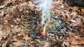 Τηλεοπτικός καπνός πυρκαγιάς στα δασικά καίγοντας φύλλα φθινοπώρου φιλμ μικρού μήκους