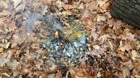 Τηλεοπτικός καπνός πυρκαγιάς στα δασικά καίγοντας φύλλα φθινοπώρου απόθεμα βίντεο