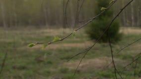 Την άνοιξη δάσος απόθεμα βίντεο