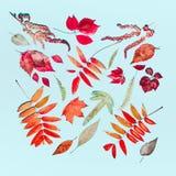 Την εποχιακή σύνθεση φθινοπώρου φιαγμένη από διάφορα ζωηρόχρωμα φύλλα φθινοπώρου το τυρκουάζ μπλε υπόβαθρο Επίπεδος βάλτε Στοκ Εικόνες