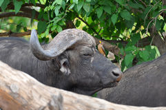 της Αφρικής νότος πάρκων β&omicron Στοκ Φωτογραφίες