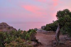 της Κριμαίας ηλιοβασίλ&epsilon Στοκ φωτογραφία με δικαίωμα ελεύθερης χρήσης