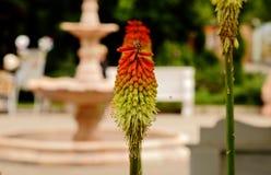 Της Κριμαίας πορτοκαλής-πράσινο λουλούδι στοκ εικόνα με δικαίωμα ελεύθερης χρήσης