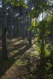 Της Κριμαίας φύση Πορεία τσάρων Στοκ Εικόνες