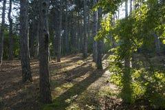 Της Κριμαίας φύση Πορεία τσάρων Στοκ Φωτογραφία
