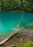 της Κροατίας sostavtsy καταρράκτες plitvice πάρκων λιμνών εθνικοί Κροατία Στοκ Εικόνα