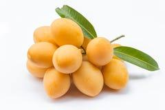Της Παρθένου Μαρίας φρούτα δαμάσκηνων στοκ εικόνες