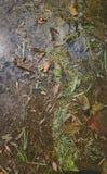 Της υφής εικόνα του βρώμικου νερού στοκ φωτογραφία