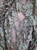Της υφής εικόνα του φλοιού δέντρων στοκ φωτογραφία με δικαίωμα ελεύθερης χρήσης