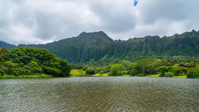 Της Χαβάης τροπικό δάσος στο Koolaus Στοκ Φωτογραφία