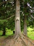 Τηλέφωνο σε ένα δέντρο στο δάσος Στοκ Εικόνες