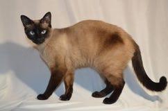 Τη γάτα σας να χαλάσουν στοκ φωτογραφία