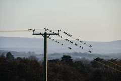 Τηλεφωνικοί πυλώνες και πουλιά Στοκ Εικόνες