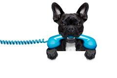 Τηλεφωνικό τηλέφωνο σκυλιών Στοκ Εικόνα