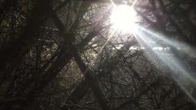 Τη νύχτα το φθινόπωρο της ισχυρής χιονόπτωσης, ένα φωτεινό φανάρι λάμπει απόθεμα βίντεο