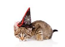 Τιγρέ γάτα με το καπέλο μαγισσών για αποκριές στο άσπρο υπόβαθρο Στοκ Εικόνες
