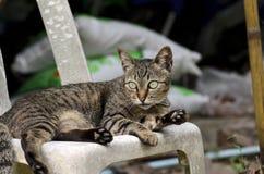 Τιγρέ γάτα που εξετάζει τη φωτογραφική μηχανή Στοκ εικόνες με δικαίωμα ελεύθερης χρήσης