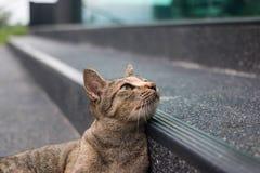 Τιγρέ γάτα που εξετάζει τη φωτογραφική μηχανή στοκ φωτογραφίες