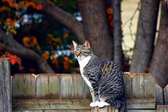 Τιγρέ γάτα σε έναν φράκτη Στοκ φωτογραφίες με δικαίωμα ελεύθερης χρήσης