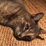 Τιγρέ γάτα σε μια κουβέρτα γιούτας Στοκ εικόνα με δικαίωμα ελεύθερης χρήσης