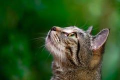 Τιγρέ γάτα στο σχεδιάγραμμα στο φυσικό πράσινο υπόβαθρο στοκ φωτογραφία με δικαίωμα ελεύθερης χρήσης