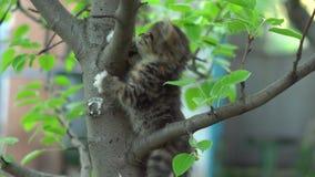 Τιγρέ γατάκι που προσπαθεί κάτω από ένα δέντρο απόθεμα βίντεο