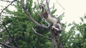 Τιγρέ γατάκι που προσπαθεί να αναρριχηθεί σε ένα δέντρο φιλμ μικρού μήκους