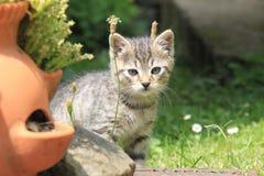 Τιγρέ γατάκι στη χλόη στοκ φωτογραφία