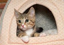 Τιγρέ να οξύνει γατακιών από το κρεβάτι γατακιών Στοκ Φωτογραφία