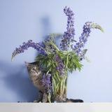 Τιγρέ περίεργα λουλούδια γατών και lupine Στοκ εικόνες με δικαίωμα ελεύθερης χρήσης