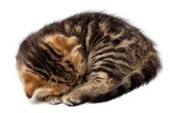 Τιγρέ σκωτσέζικοι ύπνοι γατακιών με μια σφαίρα των νημάτων Στοκ Εικόνες