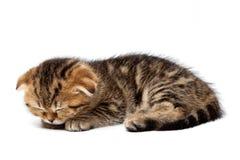 Τιγρέ σκωτσέζικοι ύπνοι γατακιών με μια σφαίρα των νημάτων Στοκ Εικόνα
