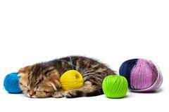 Τιγρέ σκωτσέζικοι ύπνοι γατακιών με μια σφαίρα των νημάτων Στοκ φωτογραφίες με δικαίωμα ελεύθερης χρήσης
