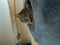 Τιγρέ σπίτι Cubby γατών στοκ φωτογραφίες με δικαίωμα ελεύθερης χρήσης