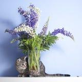 Τιγρέ χαριτωμένα λουλούδια γατών και lupine Στοκ φωτογραφία με δικαίωμα ελεύθερης χρήσης