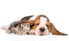 Τιγρέ ύπνος γατακιών, καλυμμένο κουτάβι κυνηγόσκυλων μπασέ αυτιών απομονωμένος Στοκ Εικόνα