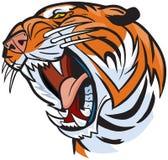 Τιγρών επικεφαλής απεικόνιση κινούμενων σχεδίων βρυχηθμού διανυσματική Στοκ Εικόνα