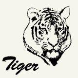 Τιγρών χέρι που σύρεται επικεφαλής Απομονωμένο σκίτσο υπόβαθρο τιγρών Τυποποιημένη μαλλιαρή τίγρη επιγραφής Στοκ φωτογραφία με δικαίωμα ελεύθερης χρήσης